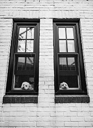 02Assigned_Rick-Webb-1_Pups-in-Window.jpg