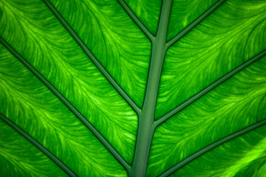 03Assigned_Larry-White-1_Green-Leaf.jpg
