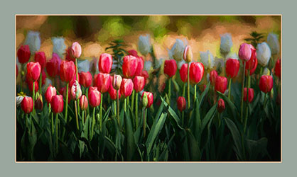 48Open_Hutch-Hutchison-2_Tulips.jpg