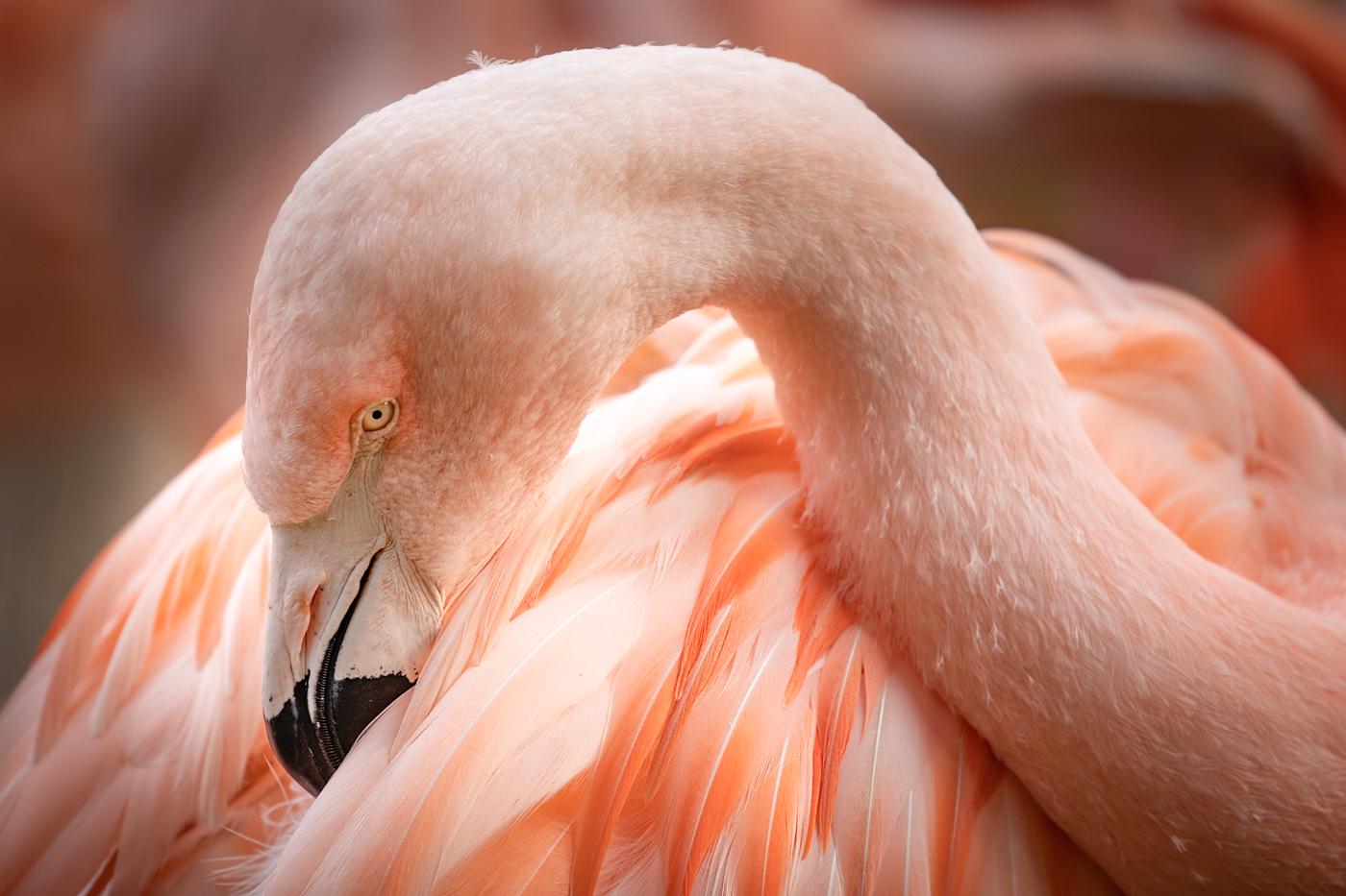 47Open_Terry_Miranda_2_Pink_Flamingo