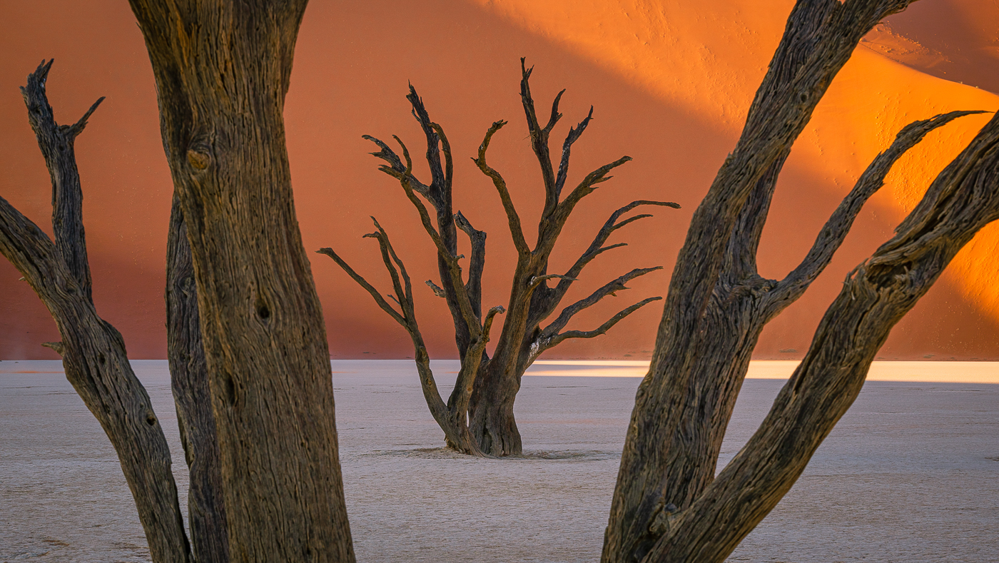 09Lily_Chang_1_Dead_Tree_Portrait
