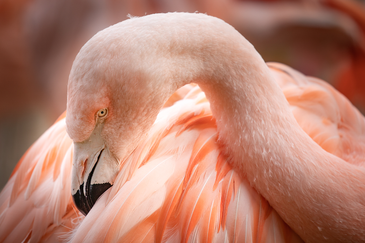 47Open_Terry_Miranda_2_Pink_Flamingo